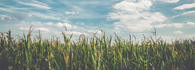 Экспорт зерновых и масличных грузов